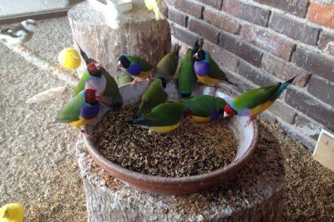 Mooie Vogels In De Voliere